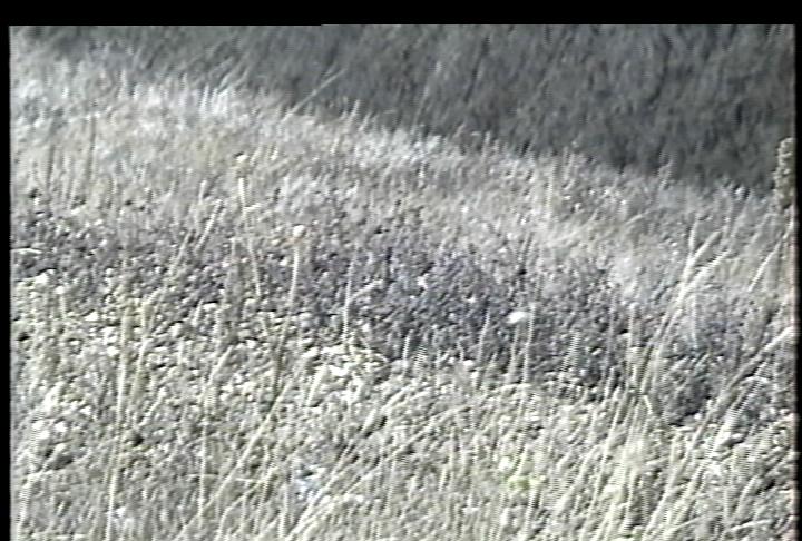 Click image for larger version  Name:VBI Vegetation AG-1970 Soft - YC - DPS-470AV TBC Extreme.png Views:1586 Size:729.6 KB ID:20712