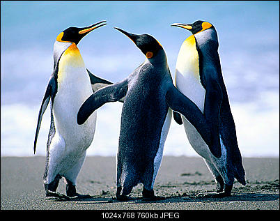 Click image for larger version  Name:Penguins.jpg Views:163 Size:759.6 KB ID:39443