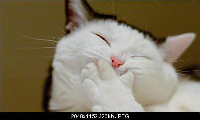 Click image for larger version  Name:IDhHZh1NRcyuPqDP2IJr_lol-cat-303363.jpg Views:72 Size:320.1 KB ID:37932