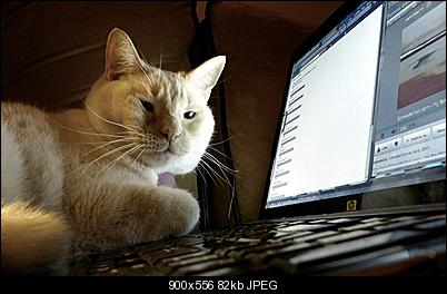 Click image for larger version  Name:computer_cat_by_only_half_a_heart-d4i4xu5.jpg Views:79 Size:81.7 KB ID:38546