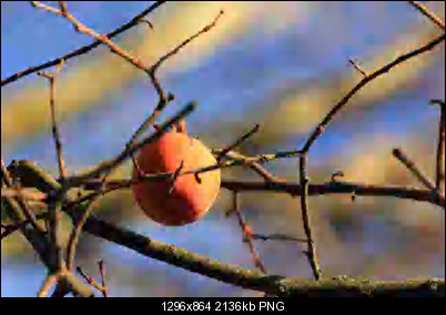 Click image for larger version  Name:fruits_low4.png Views:242 Size:2.09 MB ID:26393