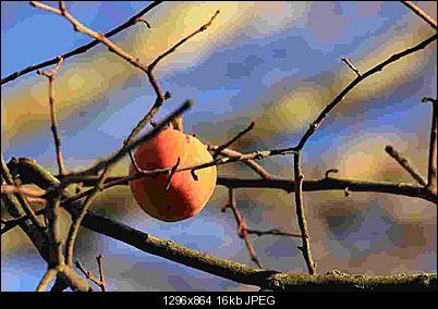 Click image for larger version  Name:fruits_16k.jpg Views:185 Size:16.1 KB ID:27693
