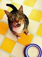 Name:  catp.jpg Views: 1104 Size:  12.4 KB
