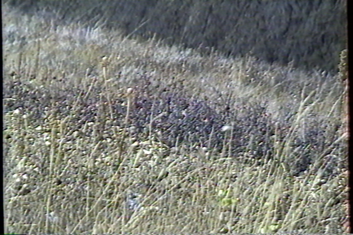 Click image for larger version  Name:VBI Vegetation AG-1970 Soft - YC - Diamond VC500.png Views:1548 Size:700.4 KB ID:20713