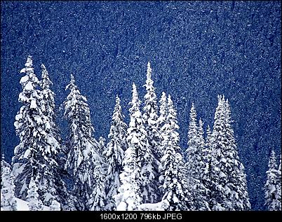 Click image for larger version  Name:snowing_forest_1600x1200-1.jpg Views:151 Size:795.6 KB ID:19753