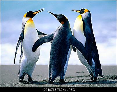 Click image for larger version  Name:Penguins.jpg Views:174 Size:759.6 KB ID:39443