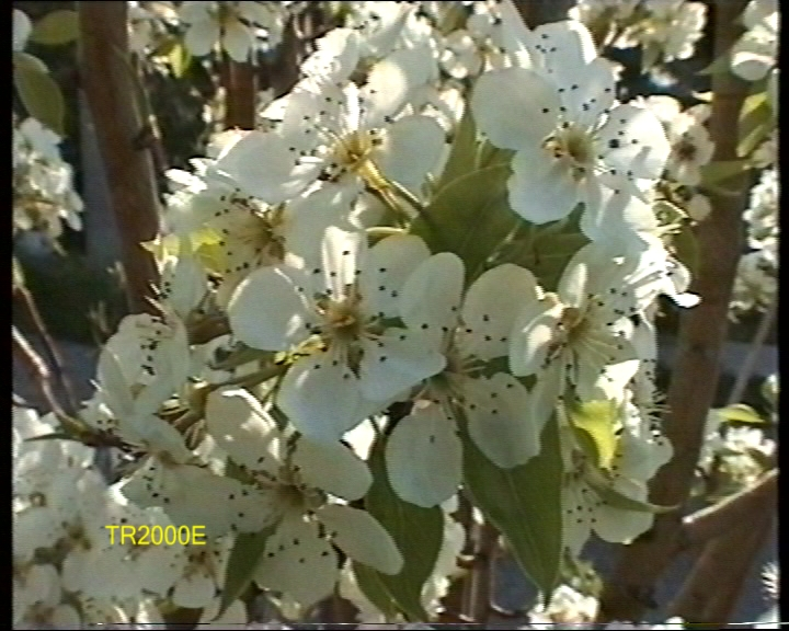 Click image for larger version  Name:flower2000e.jpg Views:5522 Size:246.7 KB ID:16785