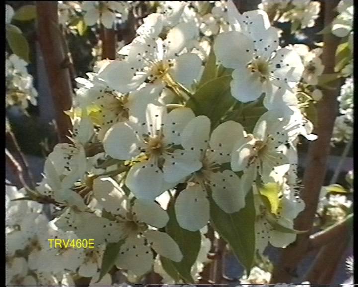 Click image for larger version  Name:flower460e.jpg Views:5655 Size:246.1 KB ID:16788