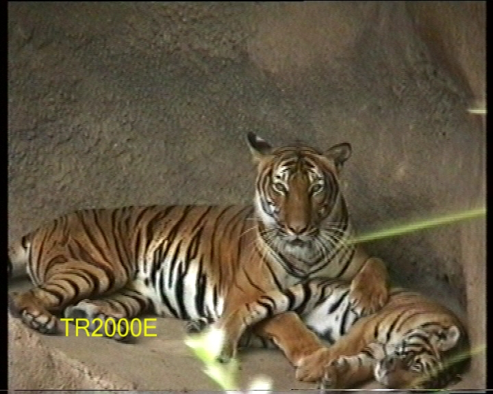 Click image for larger version  Name:BigCat2000.jpg Views:5644 Size:243.7 KB ID:16811