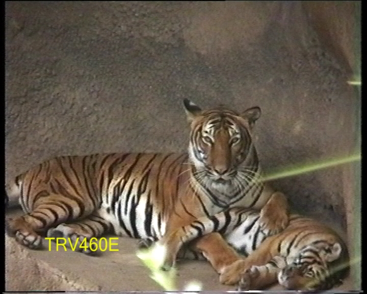 Click image for larger version  Name:BigCat460.jpg Views:5400 Size:242.2 KB ID:16812