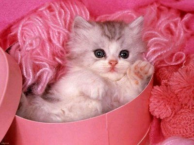 Name:  kitten.jpg Views: 346 Size:  27.0 KB