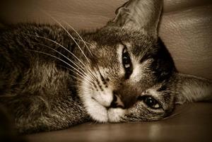 Name:  crying_cat2.jpg Views: 463 Size:  82.4 KB