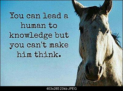 Click image for larger version  Name:Horse_no_Think.jpg Views:281 Size:22.8 KB ID:28751
