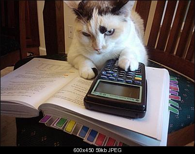 Click image for larger version  Name:calculatorcat.jpg Views:431 Size:59.1 KB ID:31007